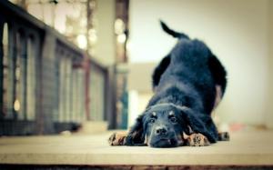 animals dogs friends pets 2560x1600 wallpaper_www.wallpaperhi.com_52